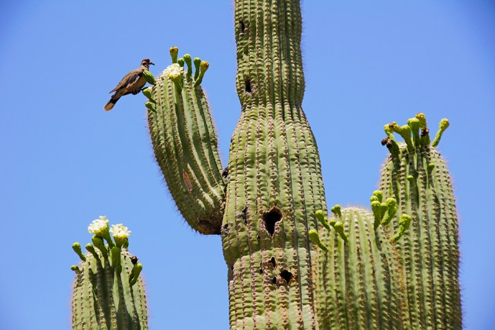 Desert Botanical Garden Cactus
