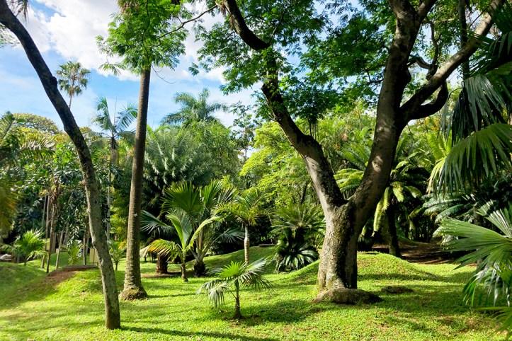 Jardin Botanico, Medellin