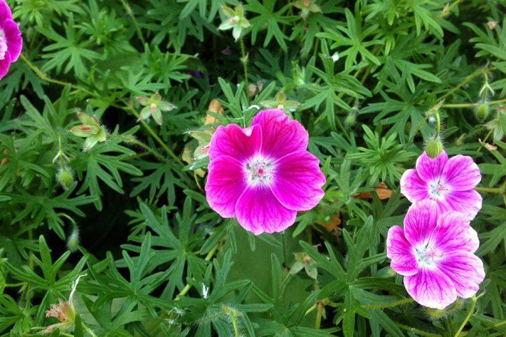Ann Arbor, Matthei Botanical Graden Michigan
