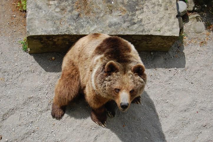 The Bear Pit, Bern