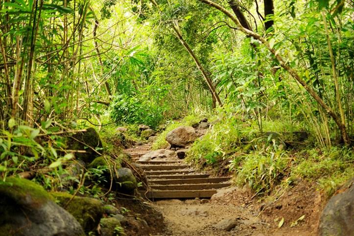 Manoa Falls Trail, Honolulu