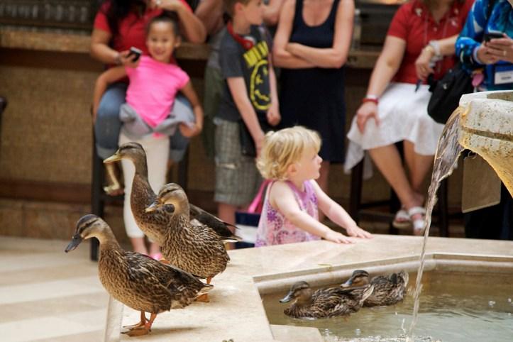 Peabody Ducks, Memphis 2
