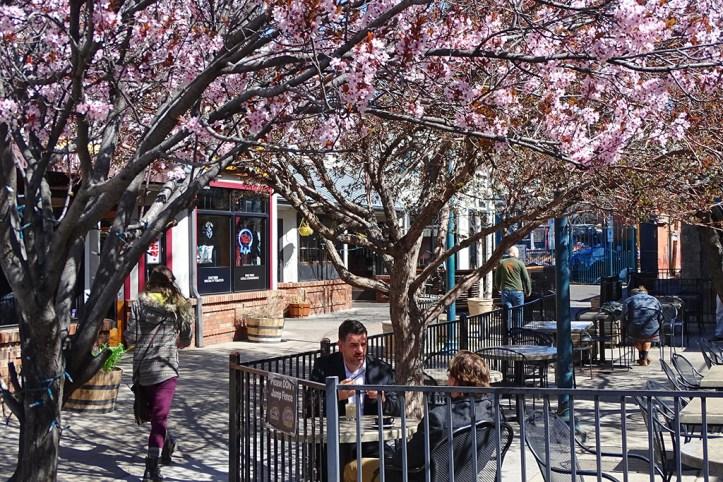 Flagstaff in Blossom