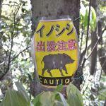 仙元山へのハイキングコース