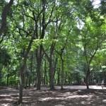 石神井公園桜広場