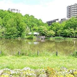 徳生公園の池