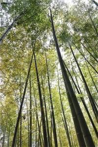 竹林がきれい