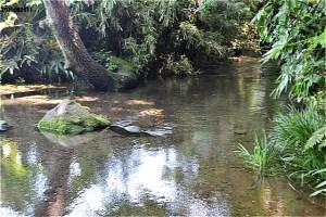南沢緑地の湧水