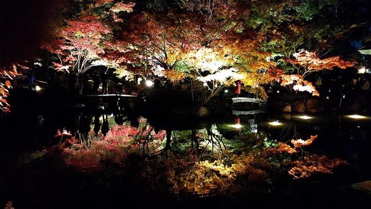 大田黒公園紅葉ライトアップ2019