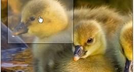 Google+ ahora permite hacer zoom en las fotos y navegar por ellas
