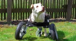 Crean la primera rueda impresa en 3D de código abierto para perros