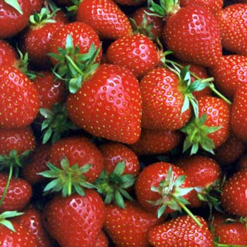 We're having strawberries in our lunch tomorrow.