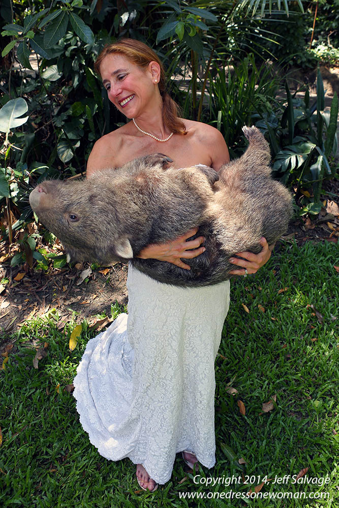 Elira the Common Wombat at the Cairns Tropical Zoo