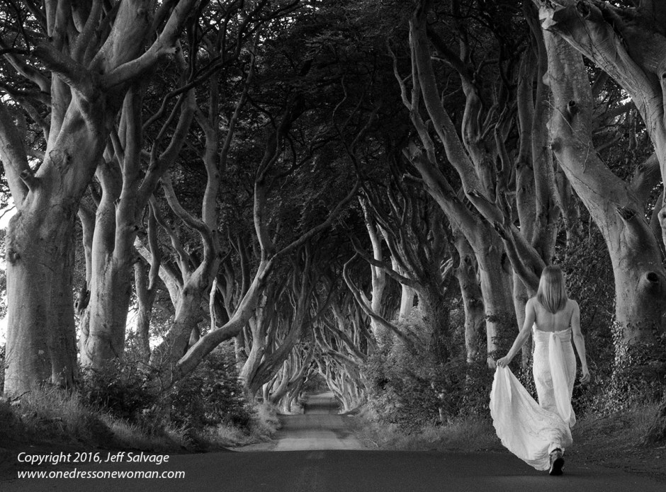 Dark Hedges - 01