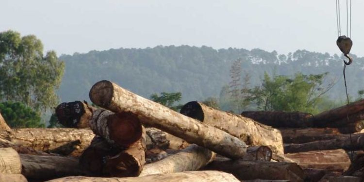 The clashes ensued when some residents tried to stop illegal lumberers from felling Rosewood