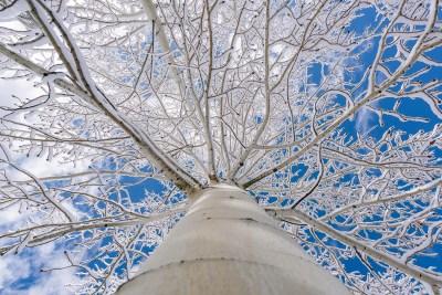 Fall First Snow Colorado