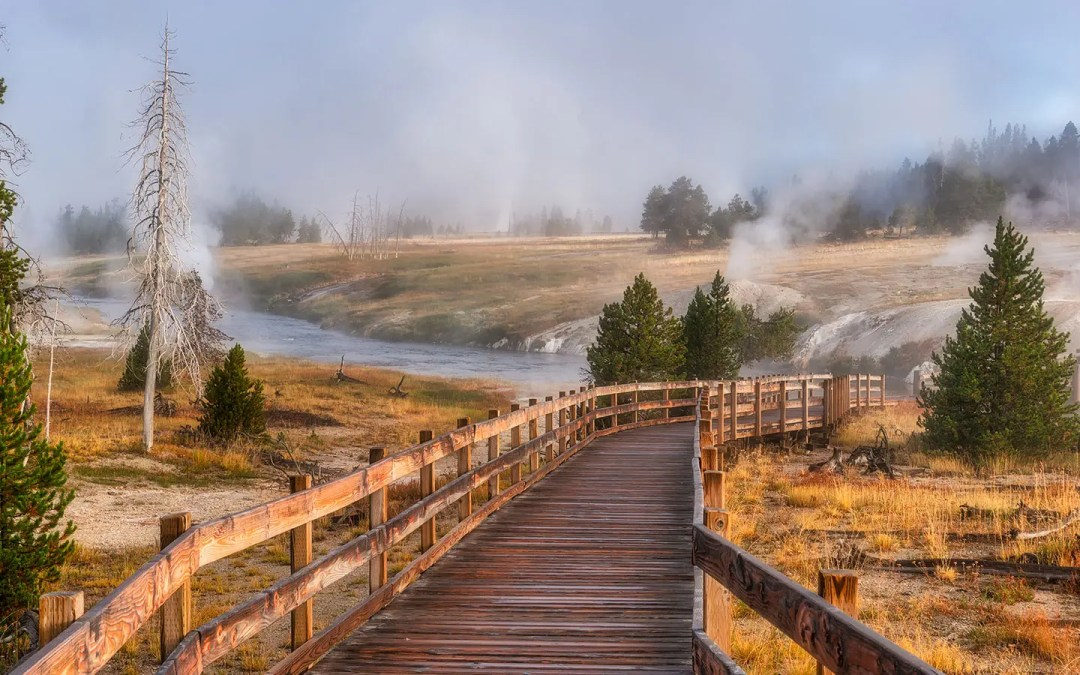 A Foggy Morning in Yellowstone National Park