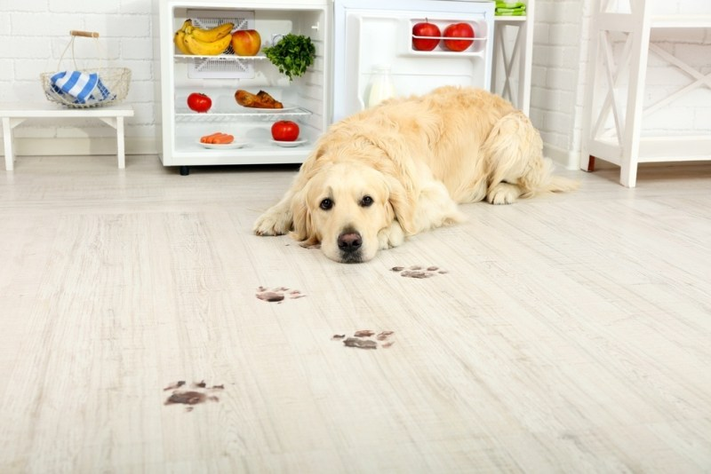 a dog lying on the floor in front of an open fridge with muddy footprints on the floor