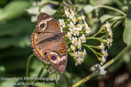 los-angeles-natural-history-museum-butterflies-060614-032-C-850px
