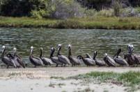malibu-creek-state-park-052315-126-C-800px