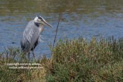 malibu-creek-state-park-052315-525-C-800px