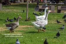 Macarthur-park-091615-215-C-750px