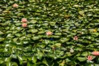 lotus-festival-071517-206-C-500px