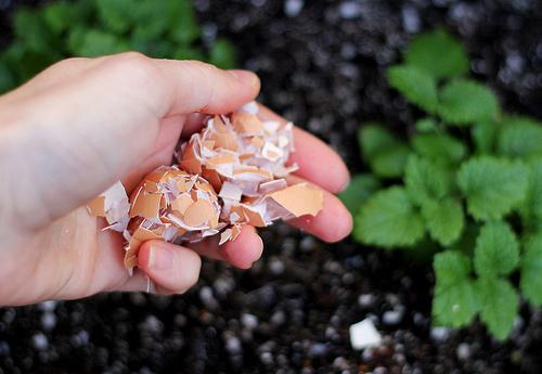 Image result for eggshells compost