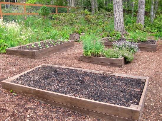 growing a raised bed garden