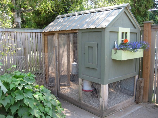 chicken coops in seattle