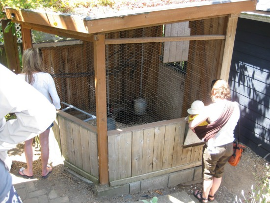 cool chicken coops