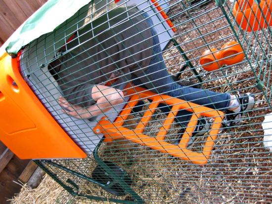 an orange chicken coop