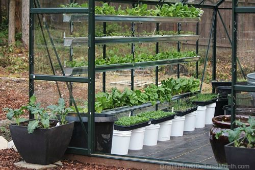 How to Find Free Containers For Your Garden - One Hundred Dollars a ...