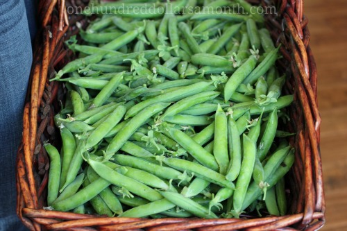 how to cook fresh english peas