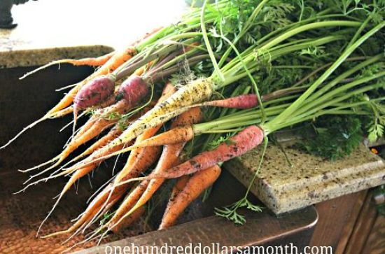 heirloom carrots