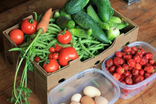 Image result for bartering vegetables