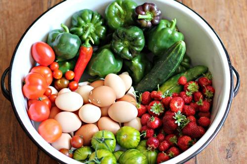 mavis garden blog fresh vegetables