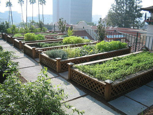 rooftop garden Green Gardens - Rooftop Gardens in the City - One Hundred