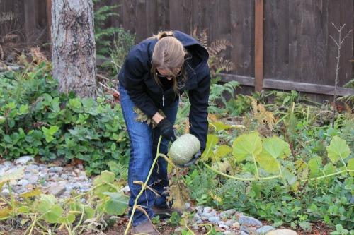 mavis picking pumpkins