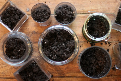 glass jars with dirt