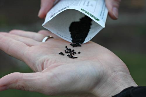 leek seeds