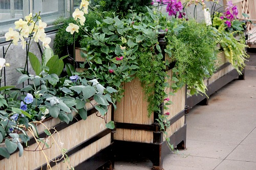 overflowing planter box
