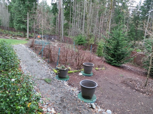 seattle garden blogs