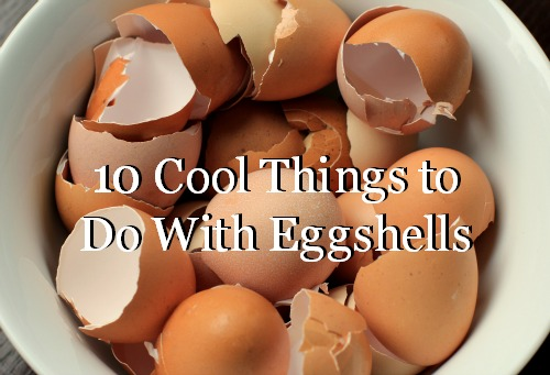 10 Cool Things to Do With Eggshells