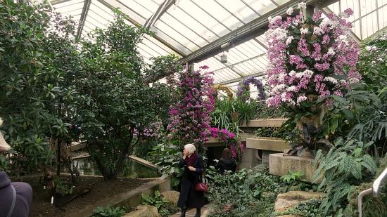 Kew Royal Botanic Gardens  Orchids pictures