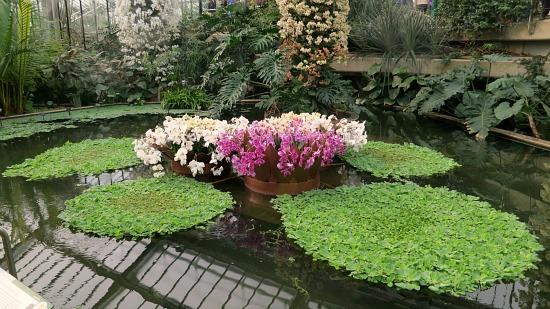 Kew Royal Botanic Gardens - Orchids