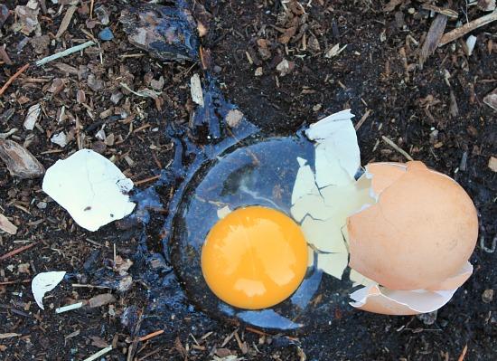 fresh egg broken