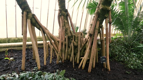 tropical tree with stick legs