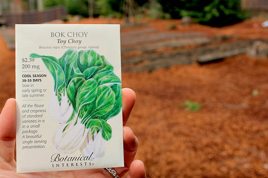 How To Grow Bok Choy One Hundred Dollars A Month