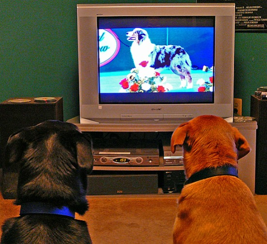 dogs watching tv